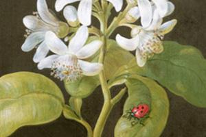 Traditional-Ladybird-Ladybird.jpg