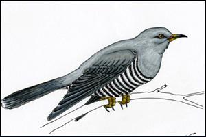 Martin-Shaw-Cuckoo.jpg